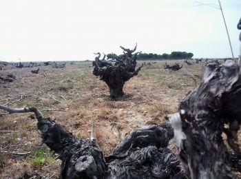 La poda en viñedos prefiloxéricos